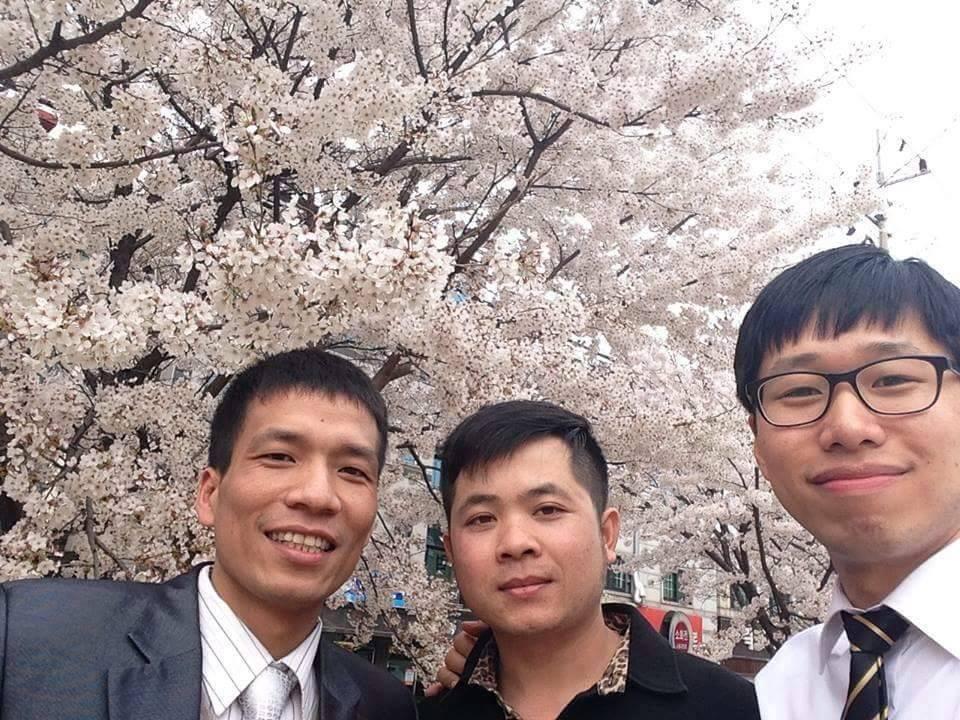 Du lịch tham quan lễ hội Hoa Anh Đào ở Hàn Quốc