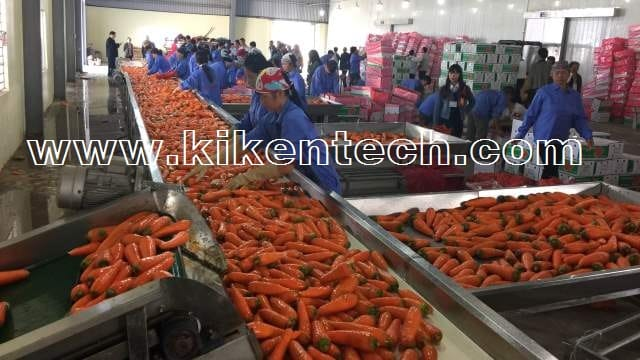 Thi công lắp đặt kho lạnh bảo quản cà rốt ở Hải Dương