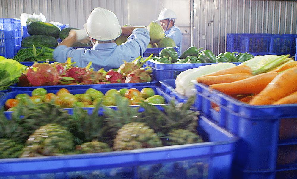 Bí quyết làm nên thương hiệu mà 90% nhà nông không biết: Lắp đặt kho lạnh bảo quản nông sản để làm giàu? Lắp đặt kho lạnh nông sản uy tín chất lượng giá rẻ