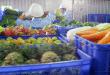 lắp đặt kho lạnh bảo quản rau xanh tại hải dương