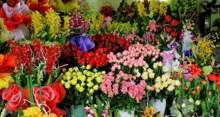 kho lanh bao quan hoa tuoi