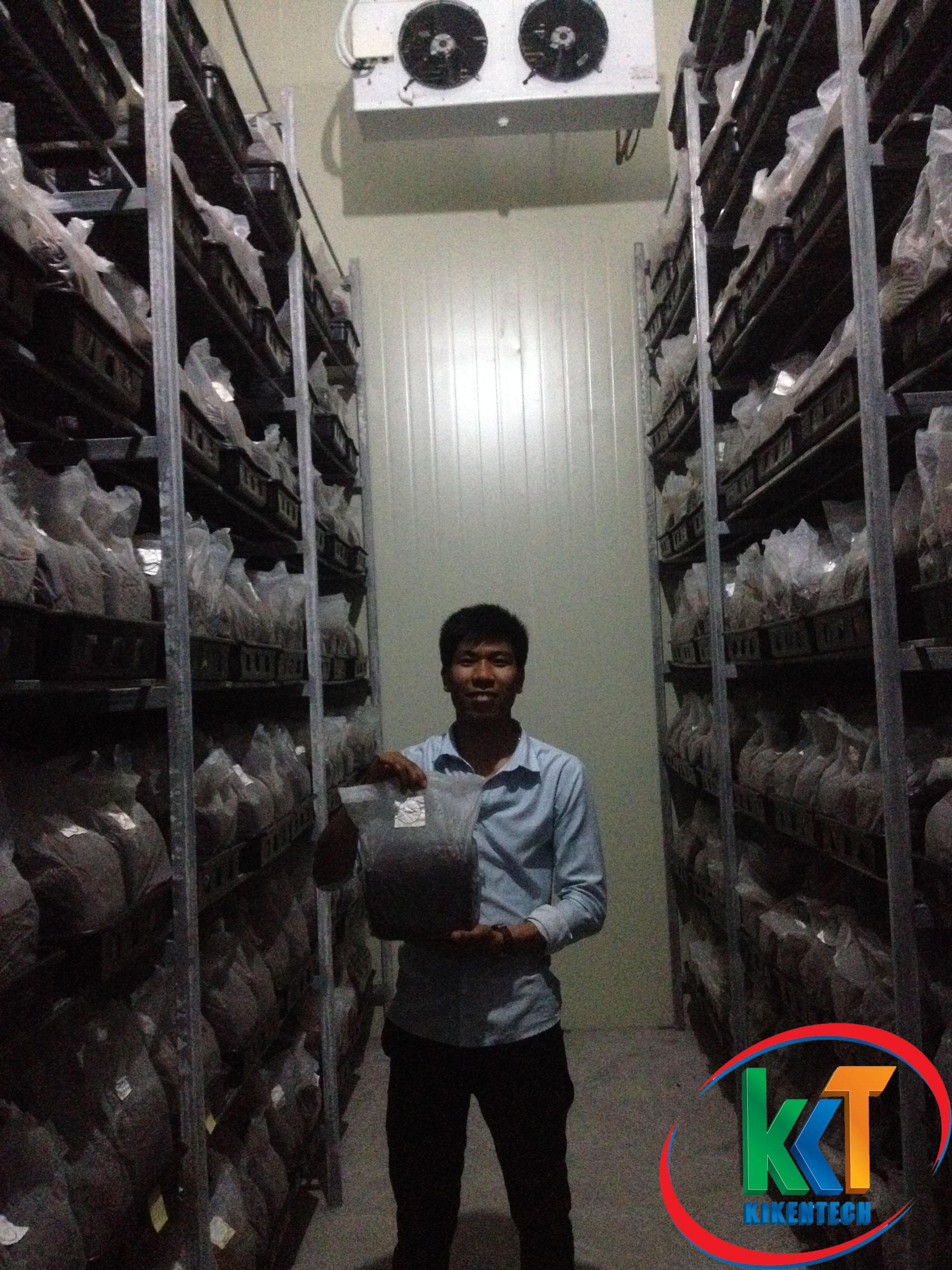 Nấm sò được sản xuất trong môi trường lạnh nên cần phải lắm đặt kho lạnh hạ nhiệt độ nuôi nấm. Lắp đặt kho lạnh bảo quản nấm, lắp đặt kho lạnh trồng nấm sò