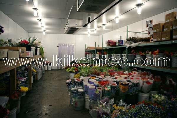 Lắp đặt kho lạnh bảo quản hoa giúp hoa tươi lâu và không bị hao hụt giá trị kinh tế. Lắp đặt kho lạnh bảo quản hoa màu, lắp đặt kho lạnh bảo quản nông sản. Dịch vụ lắp đặt kho lạnh bảo quản hoa liên hệ 0944.899.886 để được tư vấn báo giá lắp đặt kho lạnh hoa. Kho lạnh Kikentech