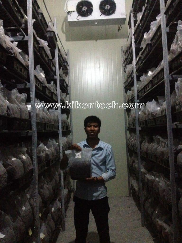 Lắp đặt kho lạnh bảo quản nấm, báo giá dịch vụ lắp đặt kho lạnh bảo quản nấm. Làm phòng mát, kho mát nuôi trồng bảo quản nấm. Lắp đặt kho lạnh bảo quản nấm
