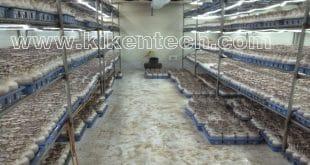 kho lạnh bảo quản nấm công nghiệp