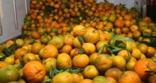 KHo lạnh bảo quản cam