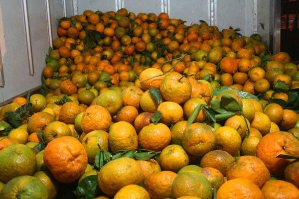Dịch vụ lắp đặt kho lạnh bảo quản cam tươi | lắp đặt kho lạnh bảo quản trái cây, báo giá lắp đặt kho lạnh bảo quản quả, thực phẩm. Làm kho lạnh bảo quản