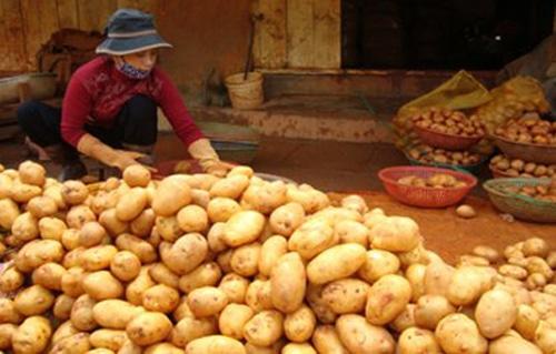 Lắp đặt kho lạnh bảo quản khoai tây giúp khoai tây không bị hư hỏng trong thời gian dài. Giúp doanh nghiệp lắp đặt kho lạnh bảo quản khoai tây tăng kinh tế