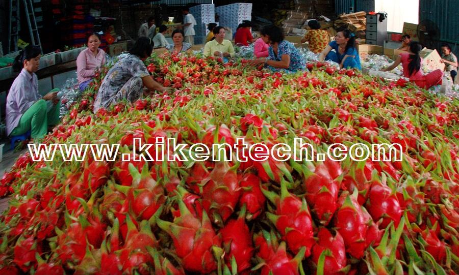 Thông tin dự án lắp đặt kho lạnh rau quả ở Bình Thuận | lắp kho lạnh bảo quản, báo giá lắp đặt kho lạnh rau quả. Lắp đặt kho lạnh rau quả bảo quản thực phẩm