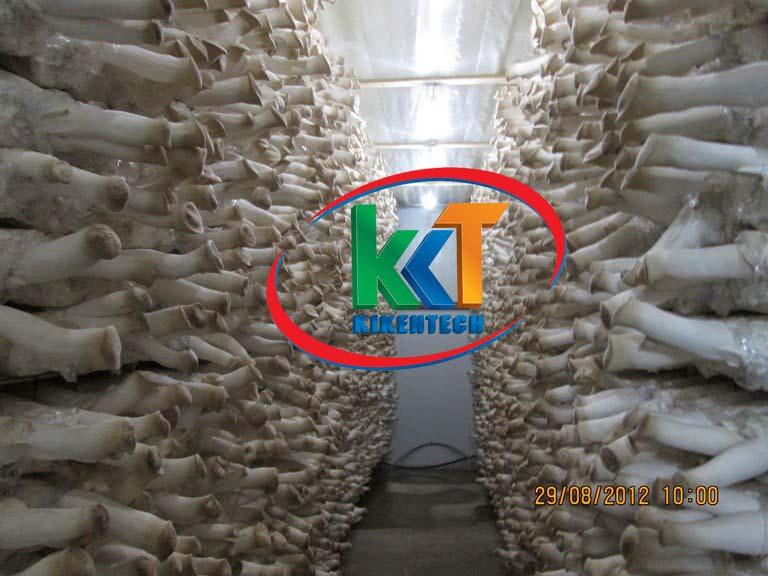 Thi công lắp kho lạnh bảo quản nấm ở Tuyên Quang. Lắp đặt kho lạnh bảo quản ở Tuyên Quang, Lắp đặt kho lạnh ở Tuyên Quang. Lắp đặt kho lạnh bảo quản nấm